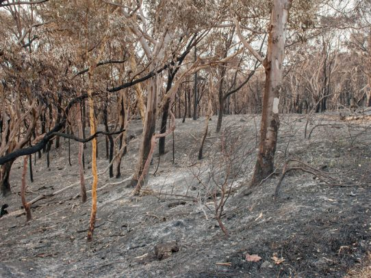 Community recovery assistance extended for bushfire-affected communities in Southern NSW