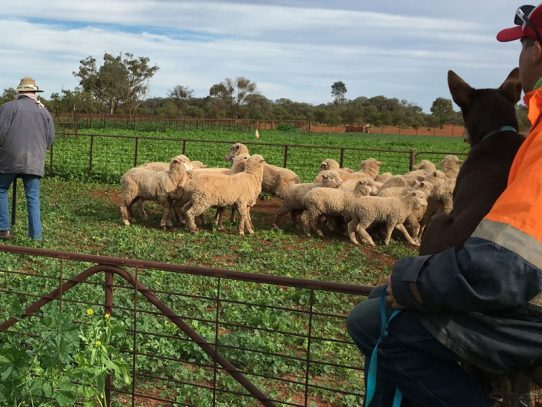 Landholders encouraged to return to school to learn new tricks