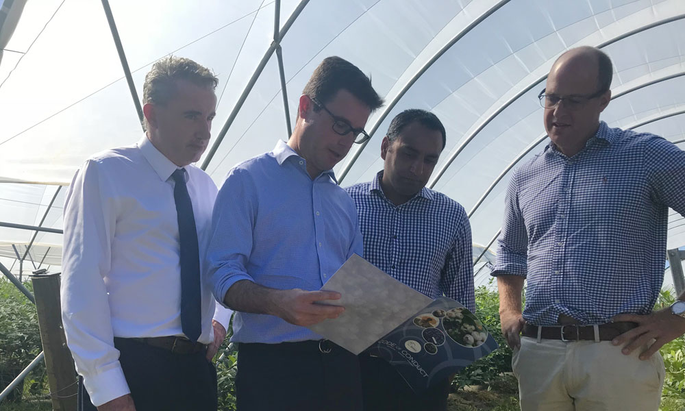 NSW blueberry industry takes lead on Code of Conduct