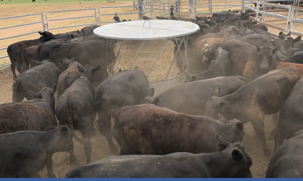 Q fever vaccination opportunities for Hunter producers