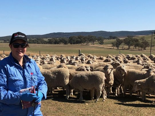 Calling on landholders to take part in Q Fever surveillance project