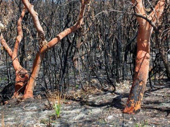 Disaster assistance for NSW communities affected by bushfires