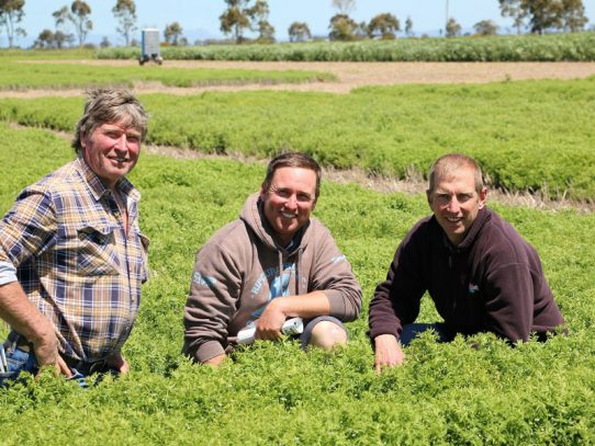 Pulses powering improvements in southern farming systems