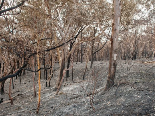 Further assistance for people affected by NSW Sir Ivan Bushfire