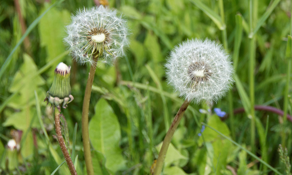 Growers urged to be proactive about weed control