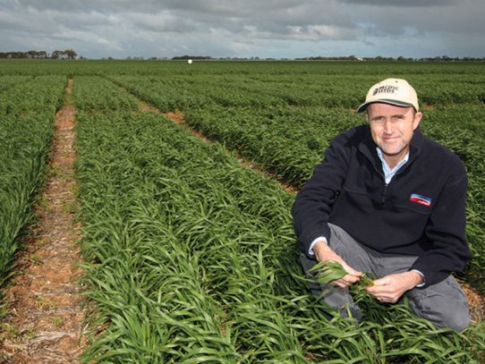 Wheat varieties for NSW growers