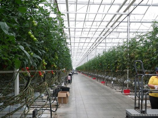 Managing greenhouse pests and diseases