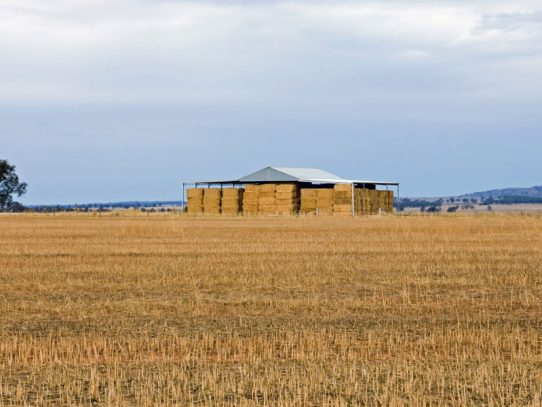 What are the top grain growers doing differently