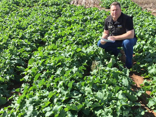 Latest canola tech featuring at field day