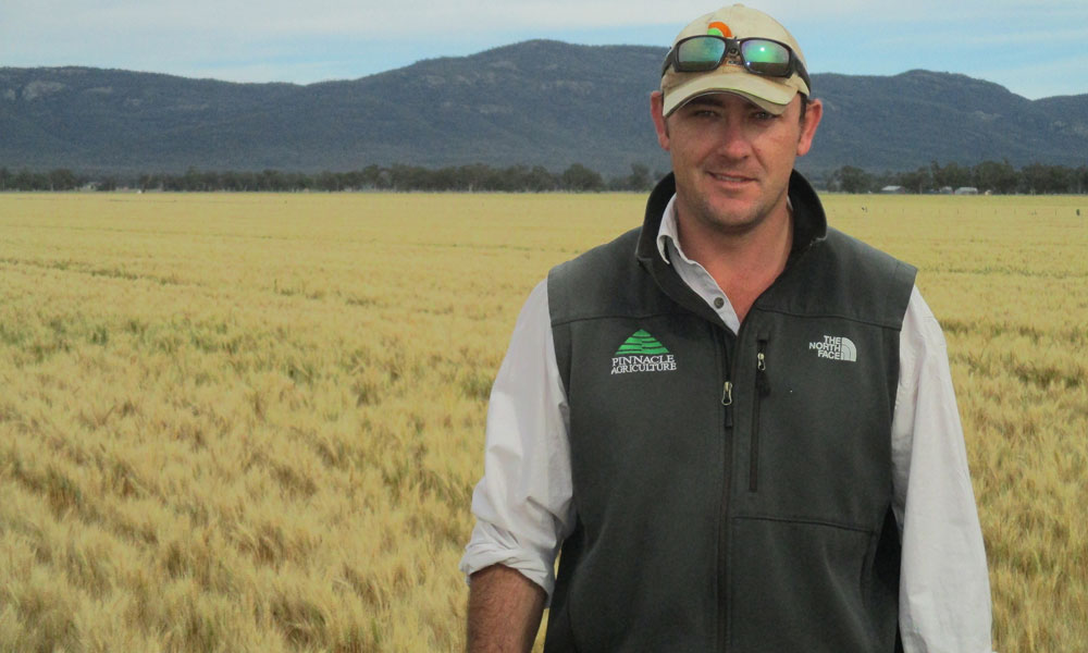 Gunnedah agronomist evaluates new APH wheat Mustang