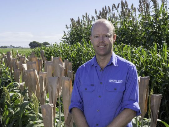 Pacific Seeds boosts grazing oats business