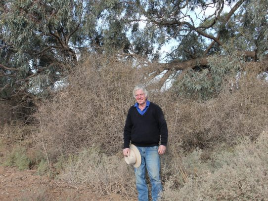 Opportunity for landholders to receive funding to carry out weed control