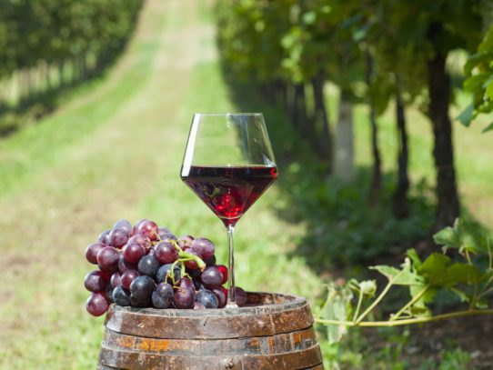 Tourists to pour into NSW wine regions