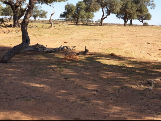 Rabbit control in Willandra Lakes! Year 1 completed, learning lessons and moving forward