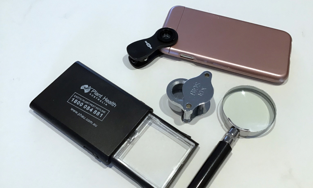 Biosecurity essentials: a magnifying lens!