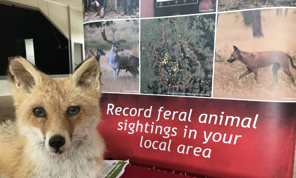 FeralScan and pest management workshops in NSW – 44 completed and counting