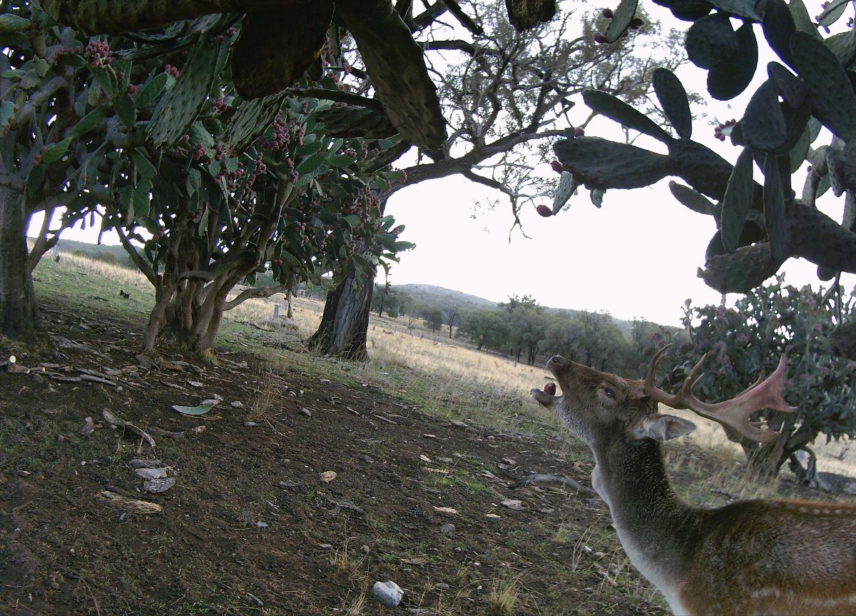 feral photos and video competition