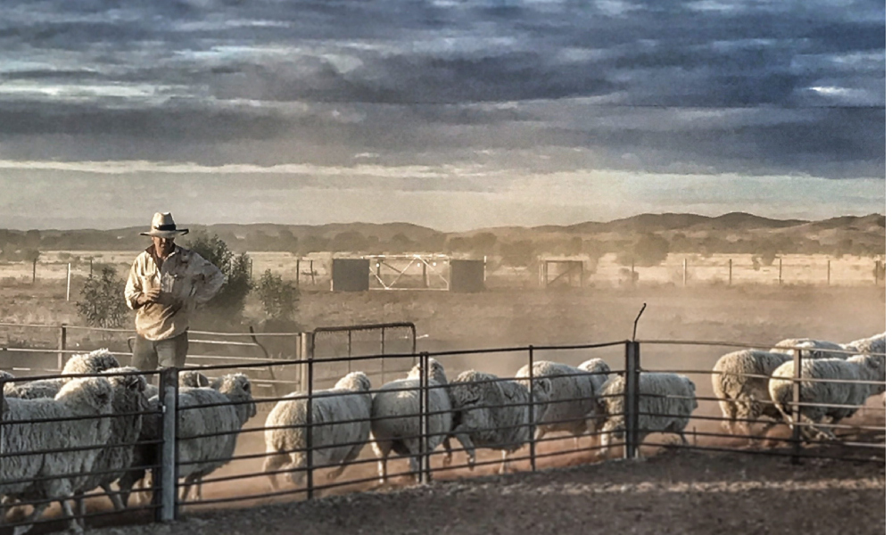 Setting up for success through a lifetime ewe management course