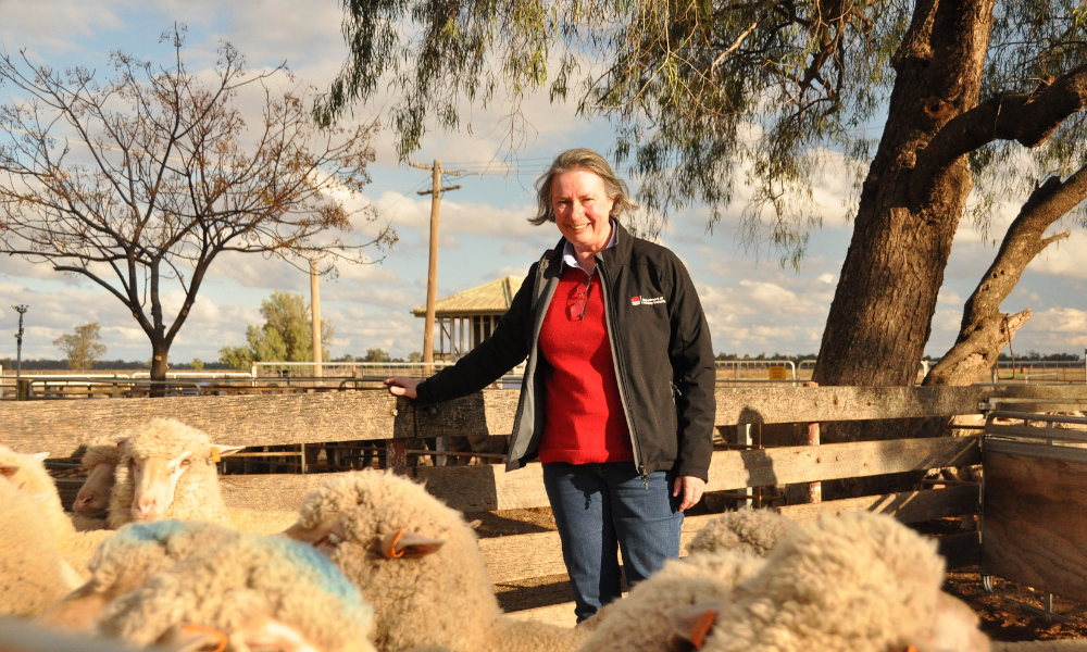 Research targets high value meat and wool markets